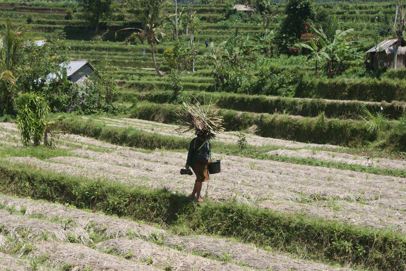 Bali en deux roues