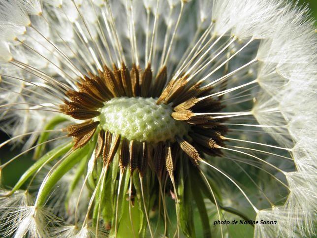 petite graine semée au grés du vent ... comme ce que nous semons chaque jour dans nos vies....