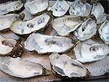 Huîtres gratinées au sabayon de champagne - 14