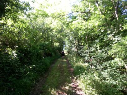 Trail des chemins du Roy