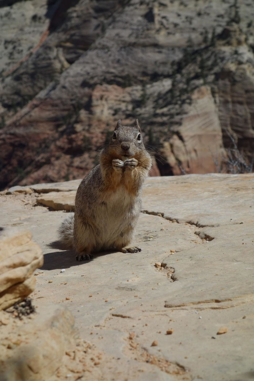 Day 7 : Zion National Park.
