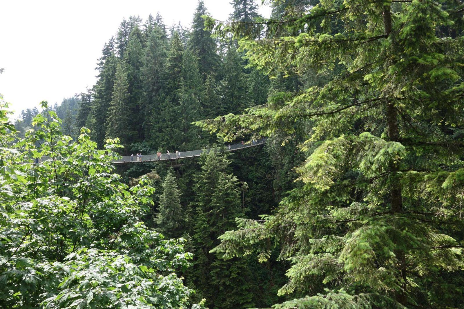 Stanley Prak et Capilano Suspension Bridge