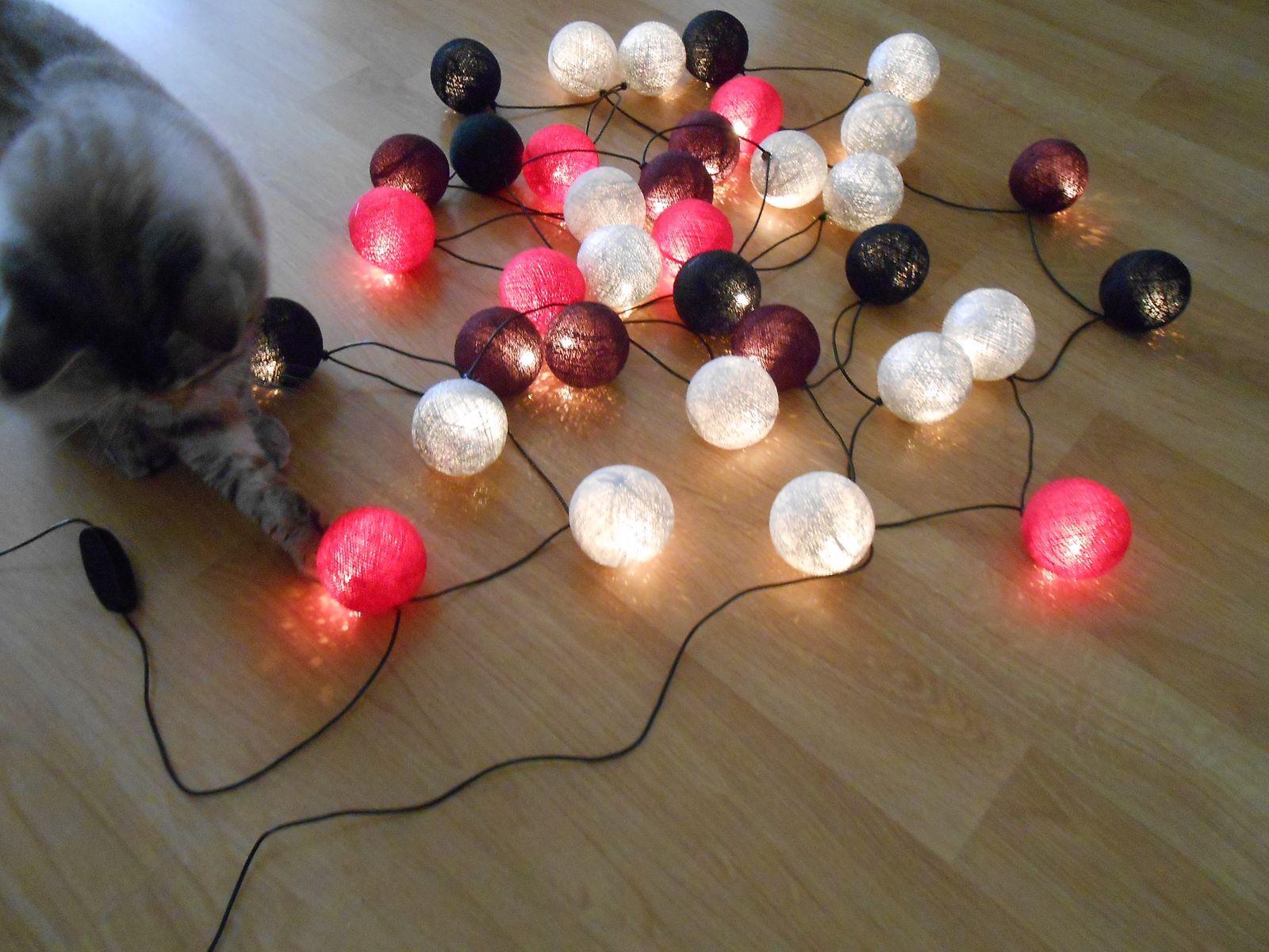 Et un chat amusé!
