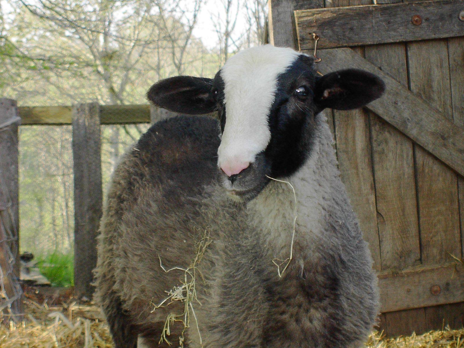 Le Lot et la laine