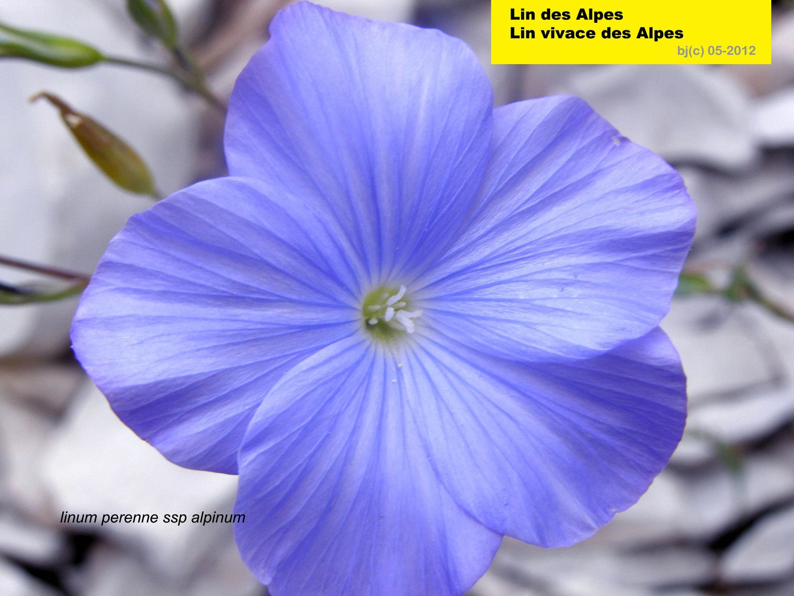 LIN - des -ALPES-ber.dranreb04.overblog.com/