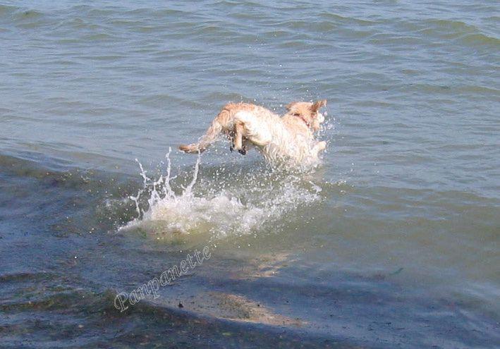 Et hop, dans les vagues !
