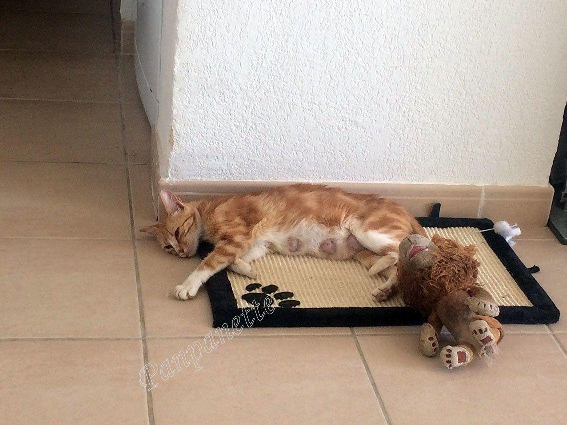 Nouvelles photos de la famille chat