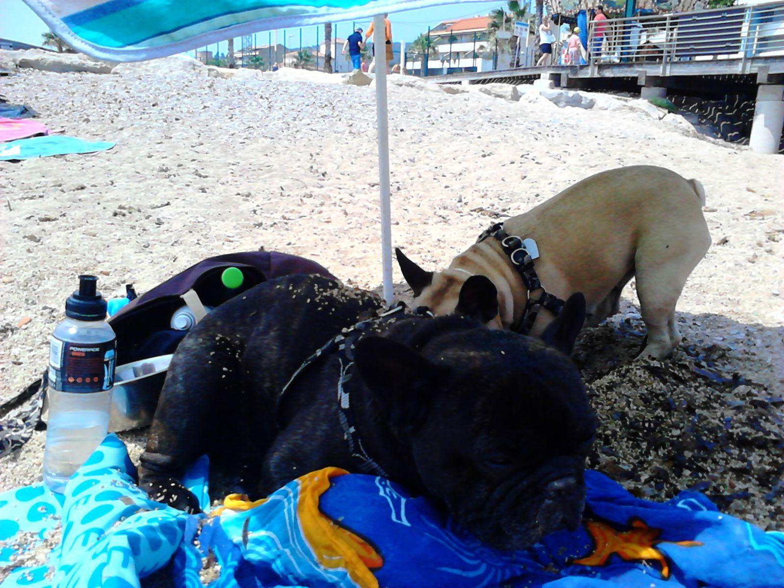 Bob et Cristal à la plage