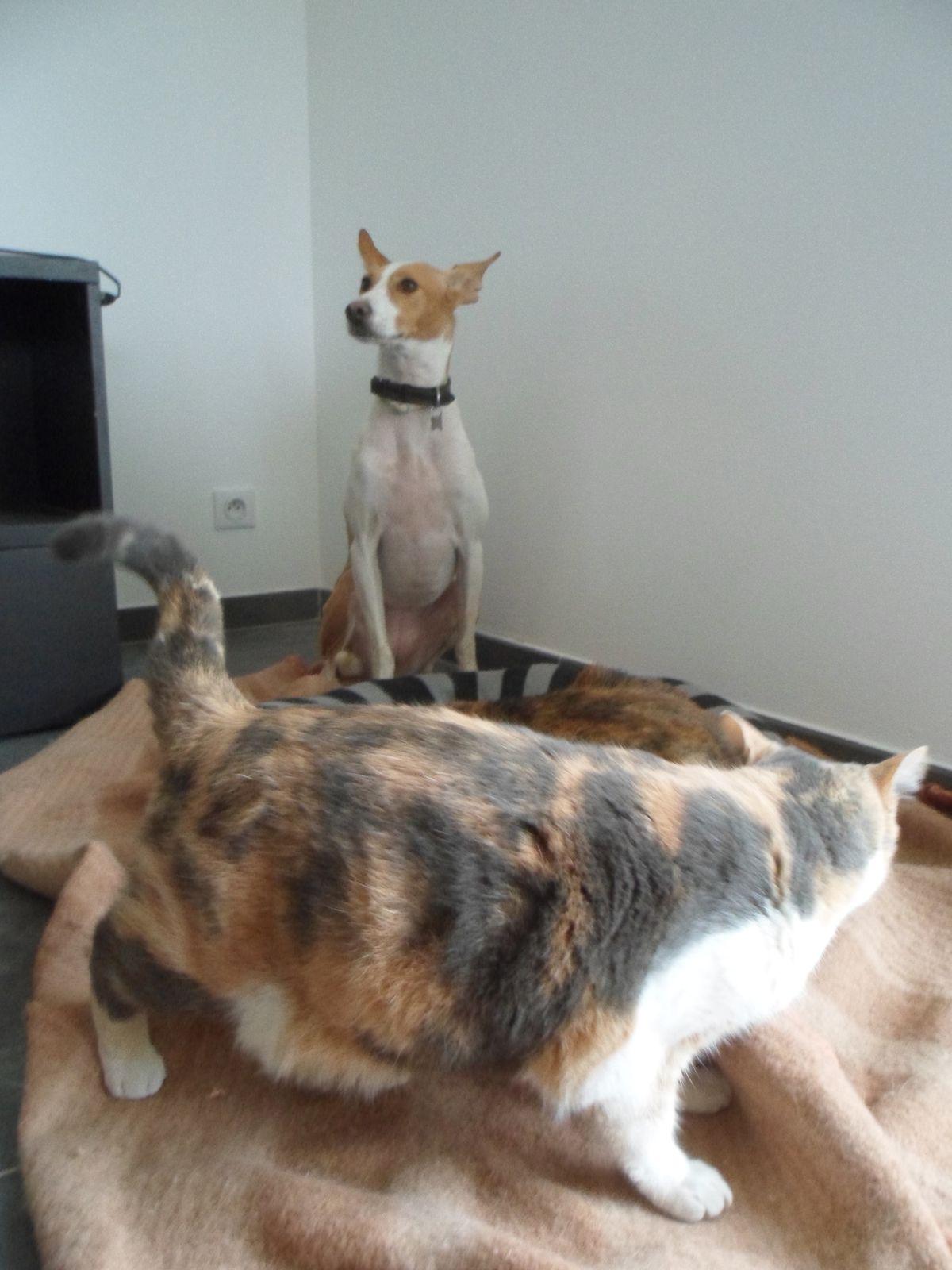Comme chien et chat...