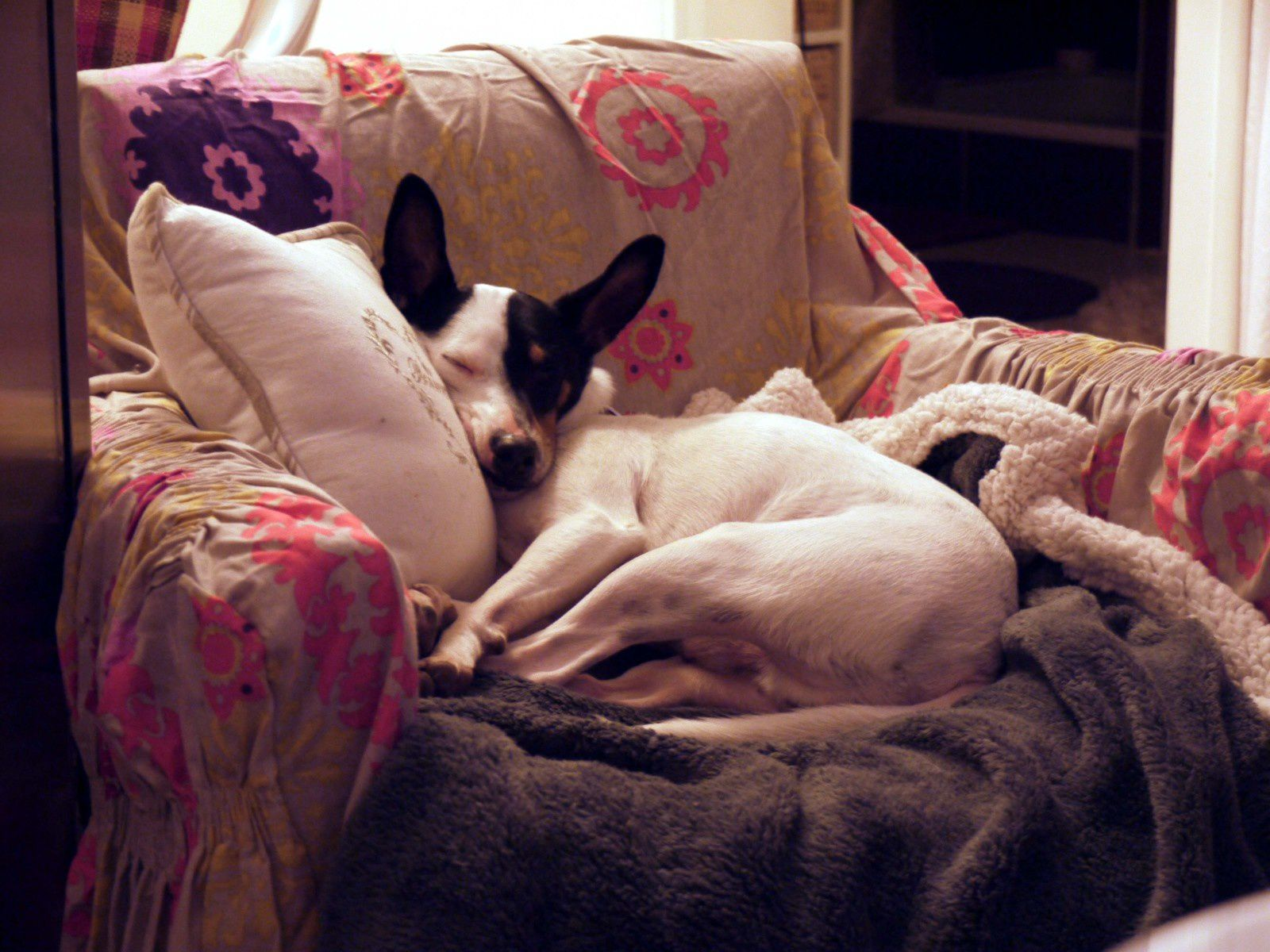 Sa place de prédilection : le fauteuil crapaud de ma grand mère, qui en est à sa 4ème génération d'animaux de compagnie !