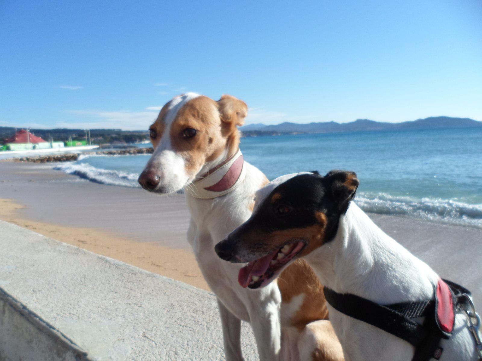 Vamos a la playa ! (...oh-ohoo-ohoo)