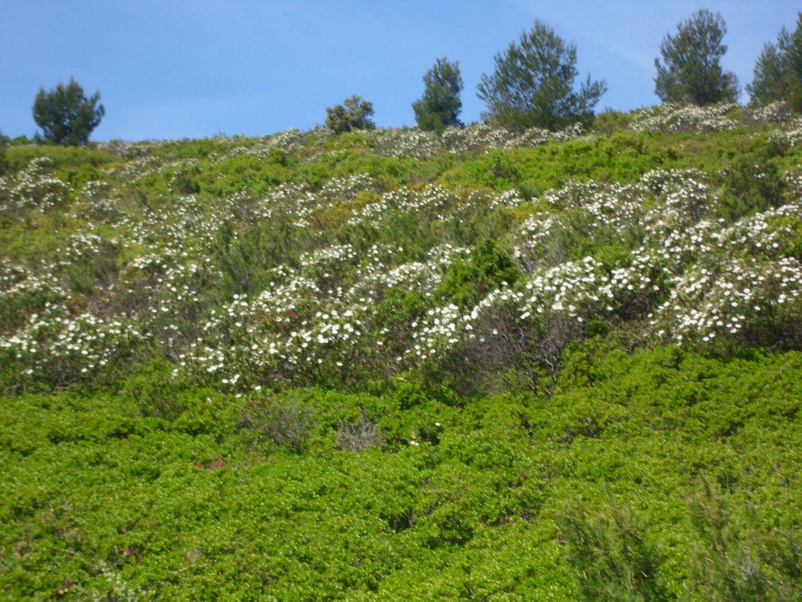 Vision des collines totalement vertes, profitons-en, ça va pas durer !!!