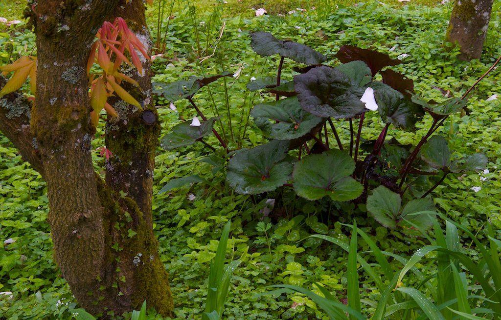 Jardins de Sericourt