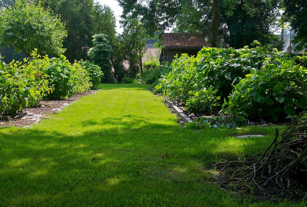 le jardin picard. l'allée aux hydrangéas.