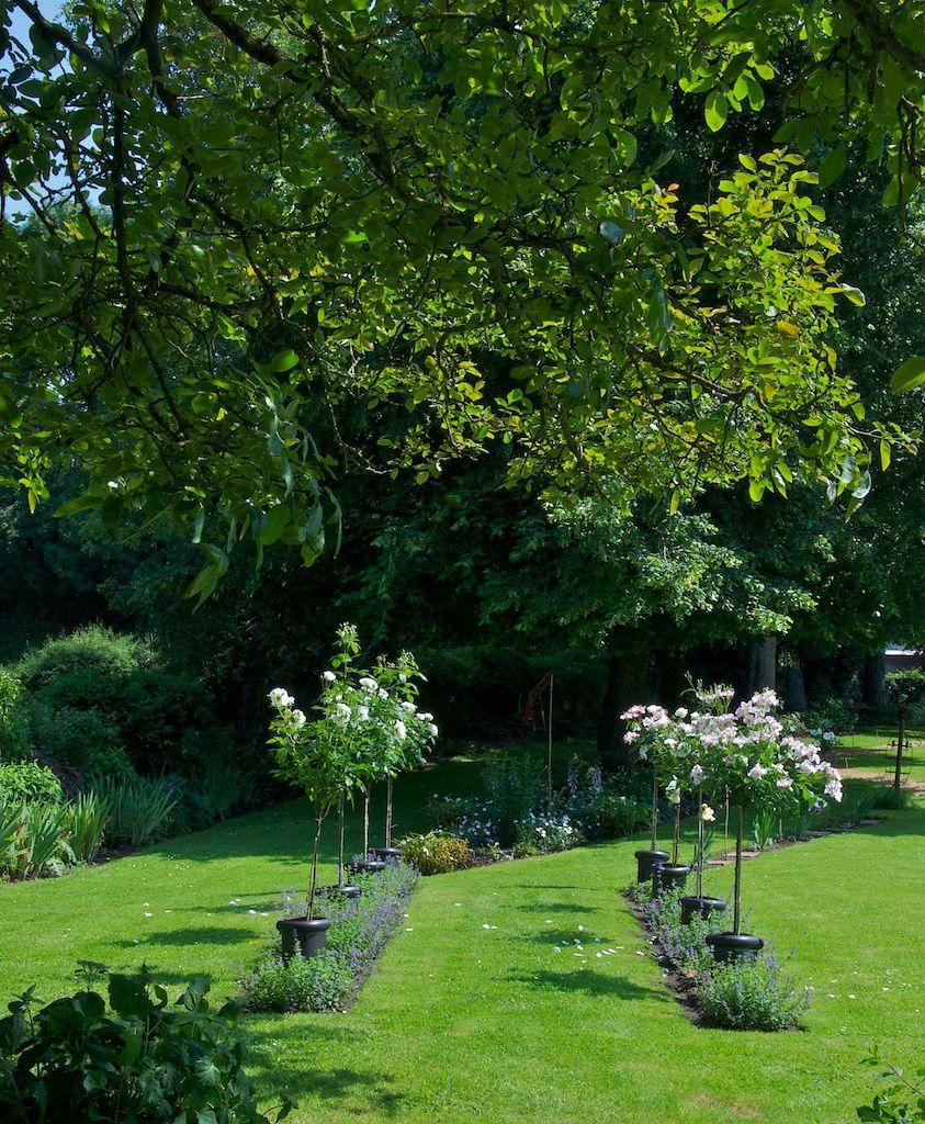 Le jardin picard. la route des rosiers tiges.