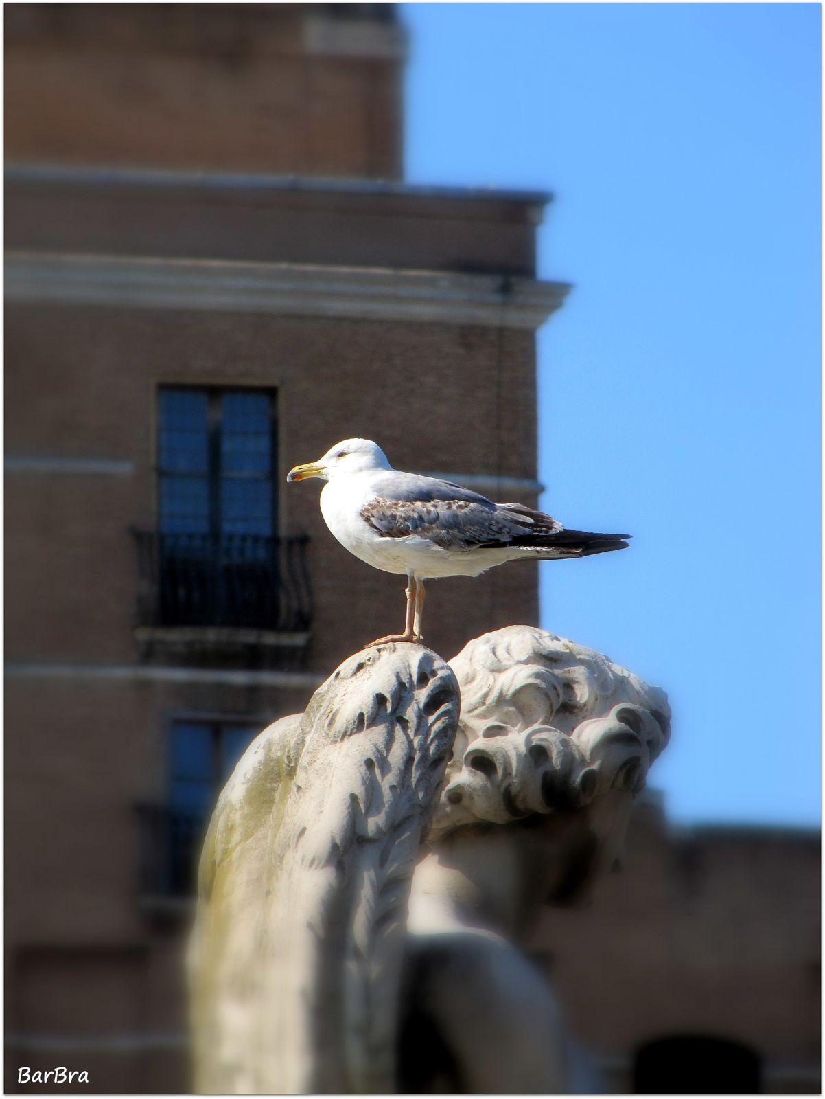 ... un gabbiano si riposa sull'ala di uno dieci angeli recanti i simboli della passione,