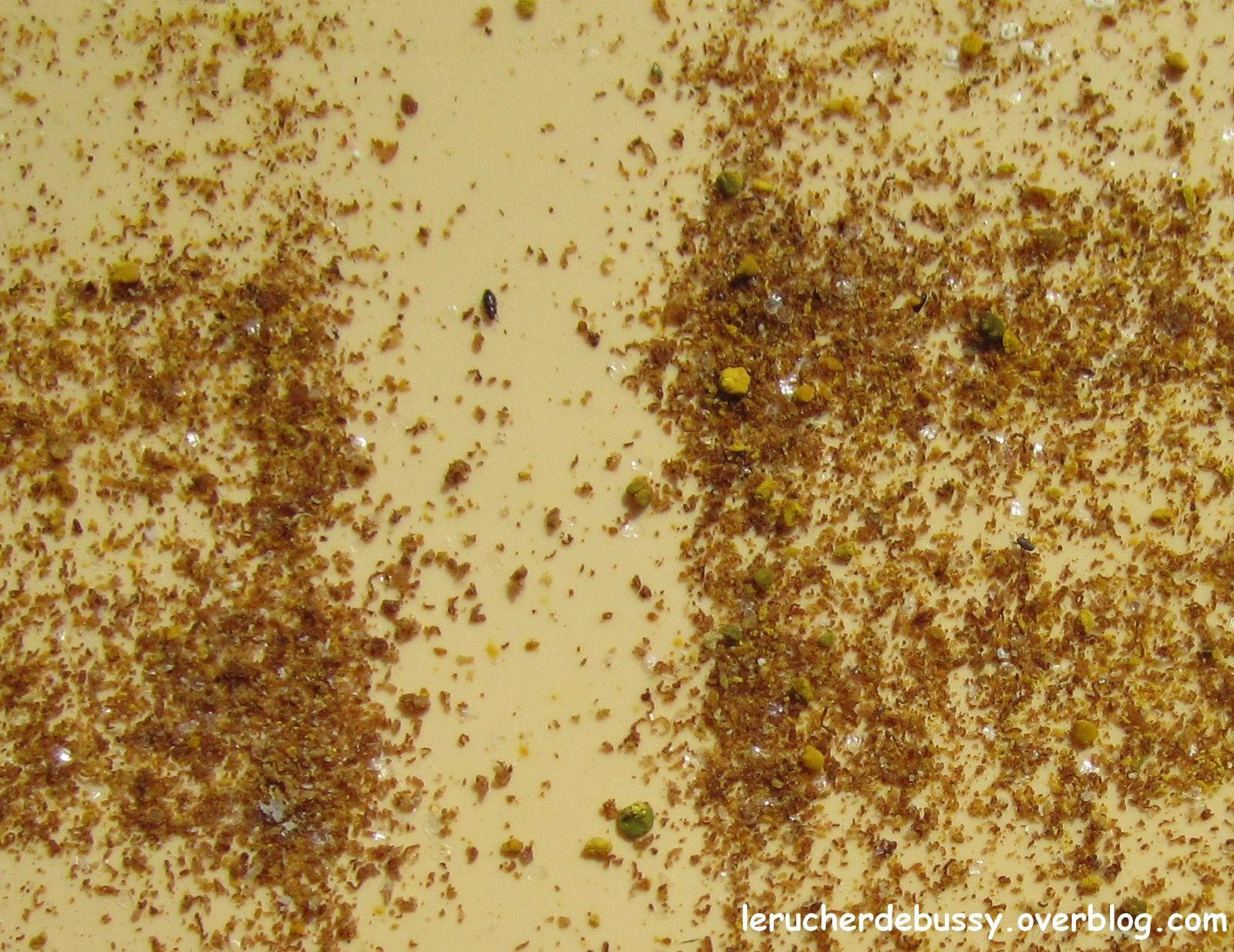 En jaune du pollen de saule marsault. En vert probablement du pollen de buis.