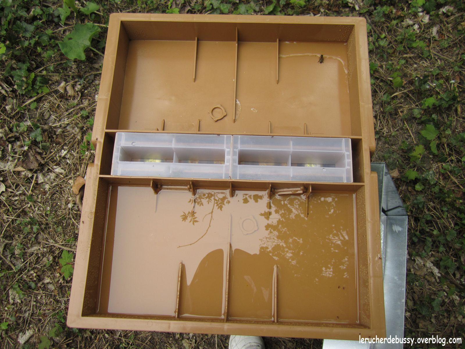 Le rucher s 39 agrandit le rucher de bussy - Comment se debarrasser des abeilles dans une cheminee ...
