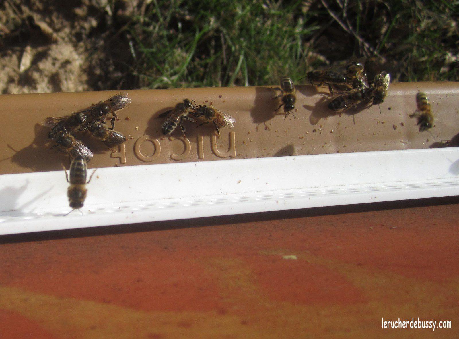 Visite au rucher le 16 février