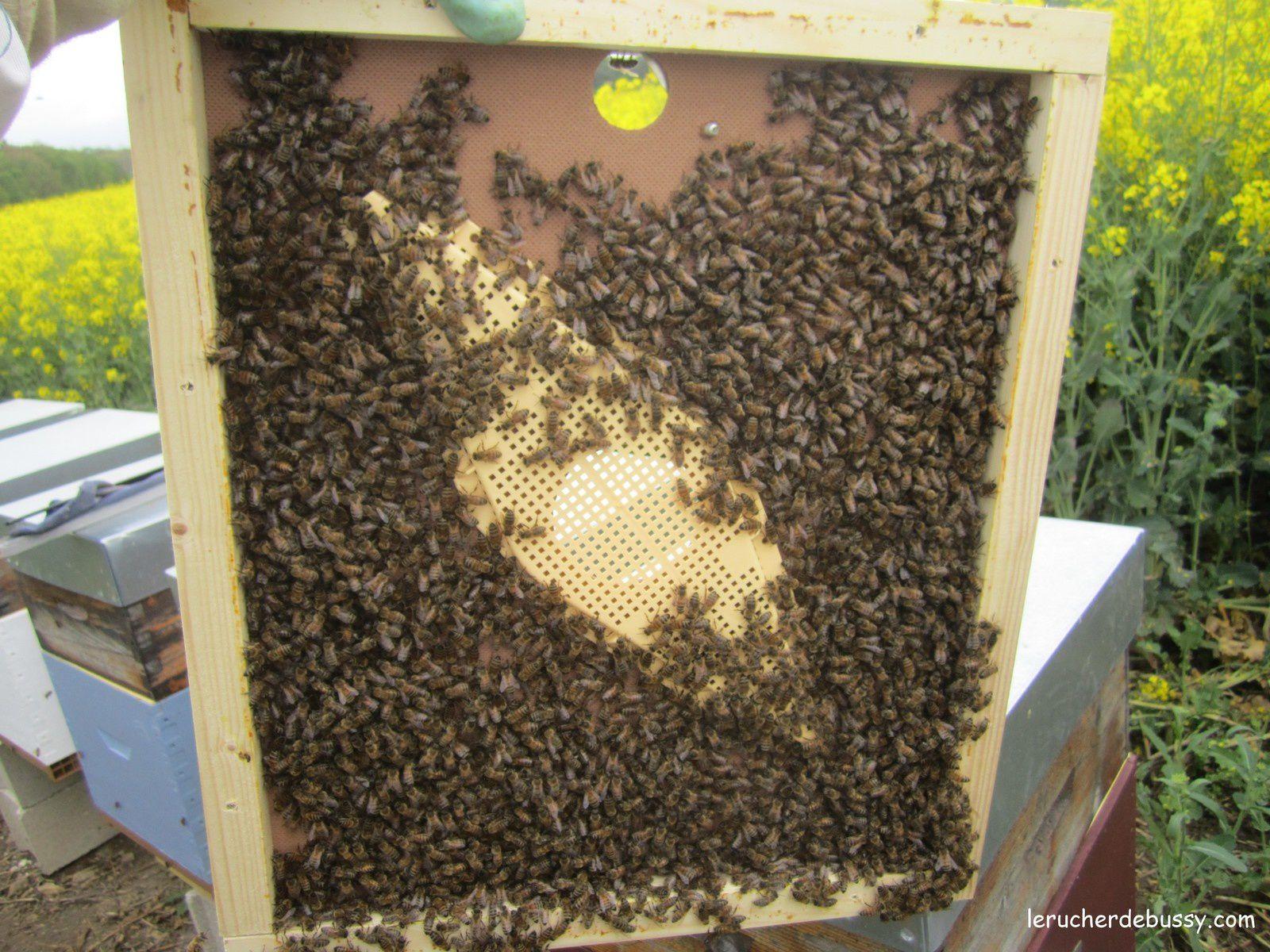 Magnifique printemps apicole!