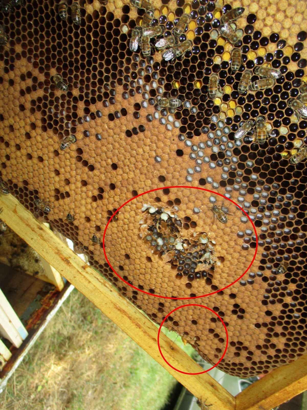 2015, l'année apicole au gré des saisons