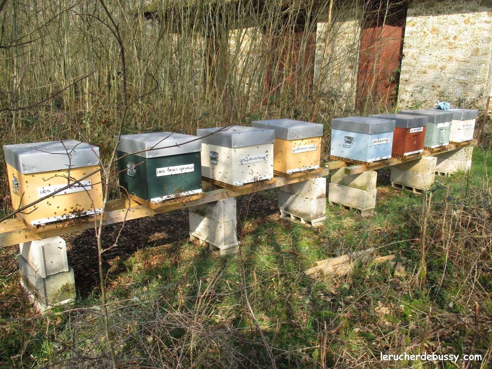Quand le saule marsault se fait beau, les abeilles se lèvent tôt...