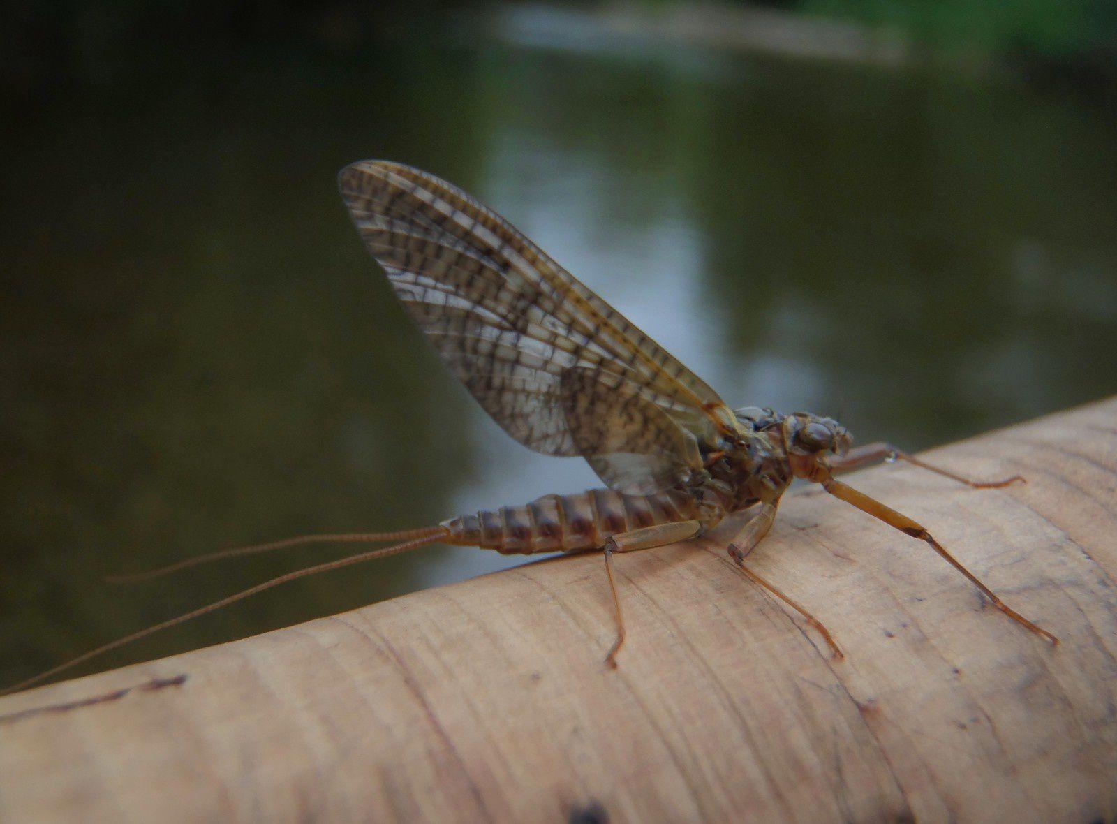 L'entomologie......(ou pas!!!)