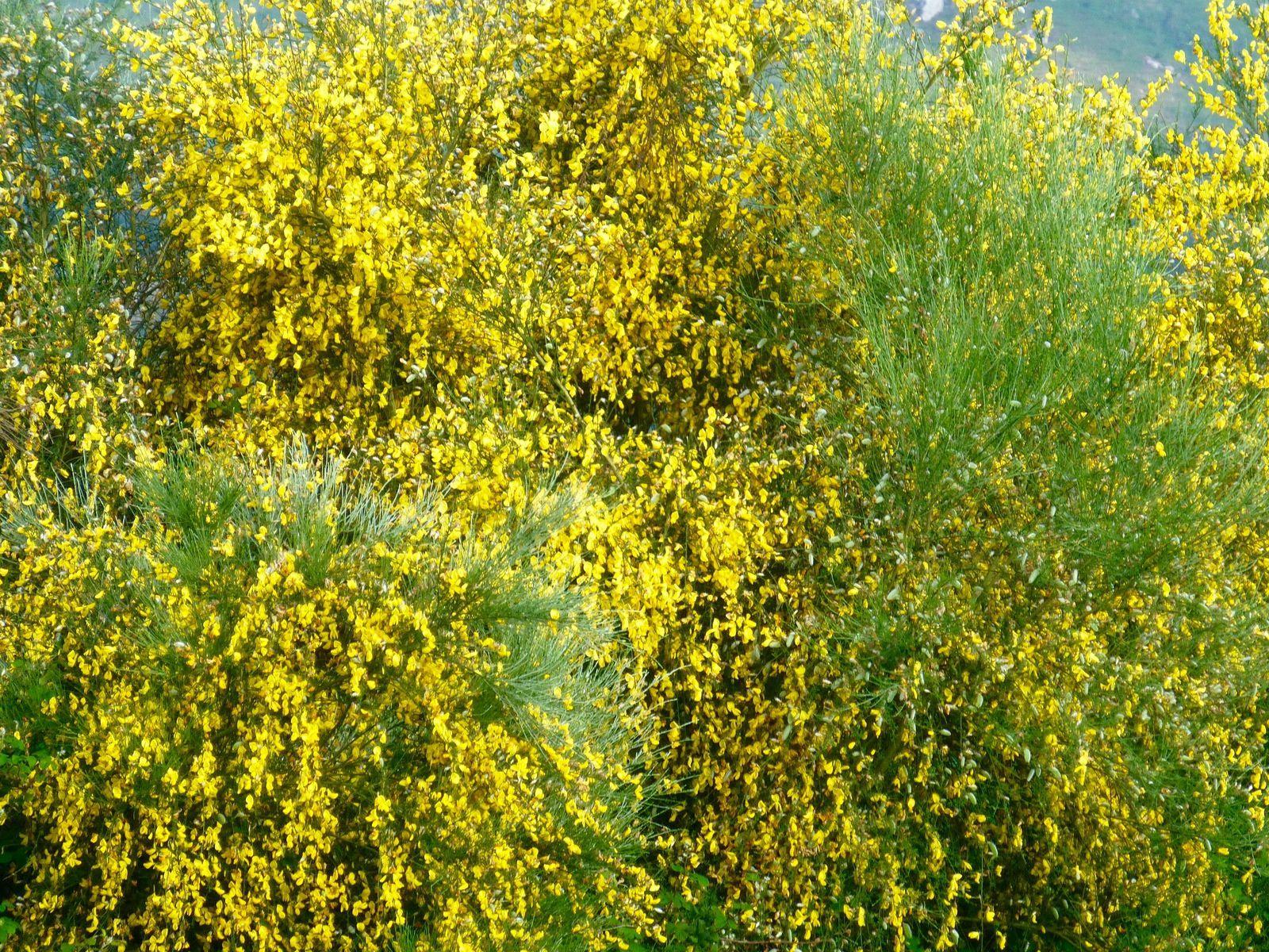 Une journee paisible, avec des fleurs entre les orties, un horreo encore en fonction et comme toujours des regards animaliers qui semblent toujours vous poser des questions!!