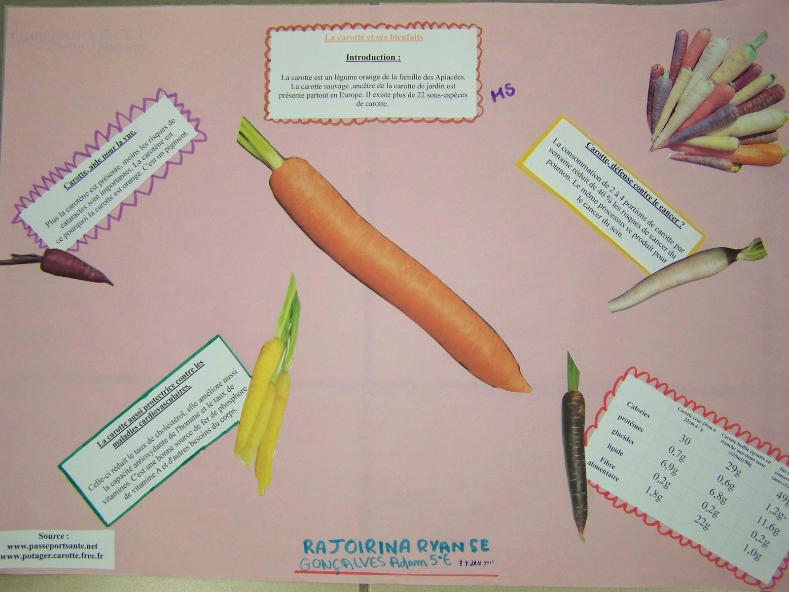 5°E expo Légumes