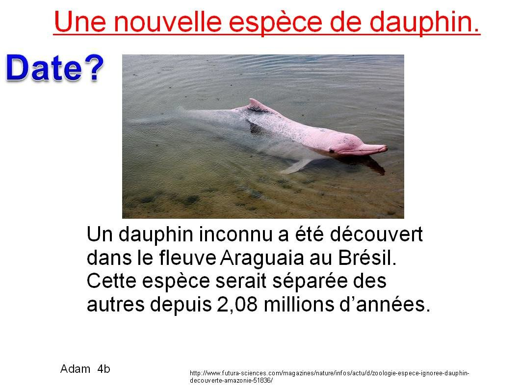 Dauphin / Développement durable