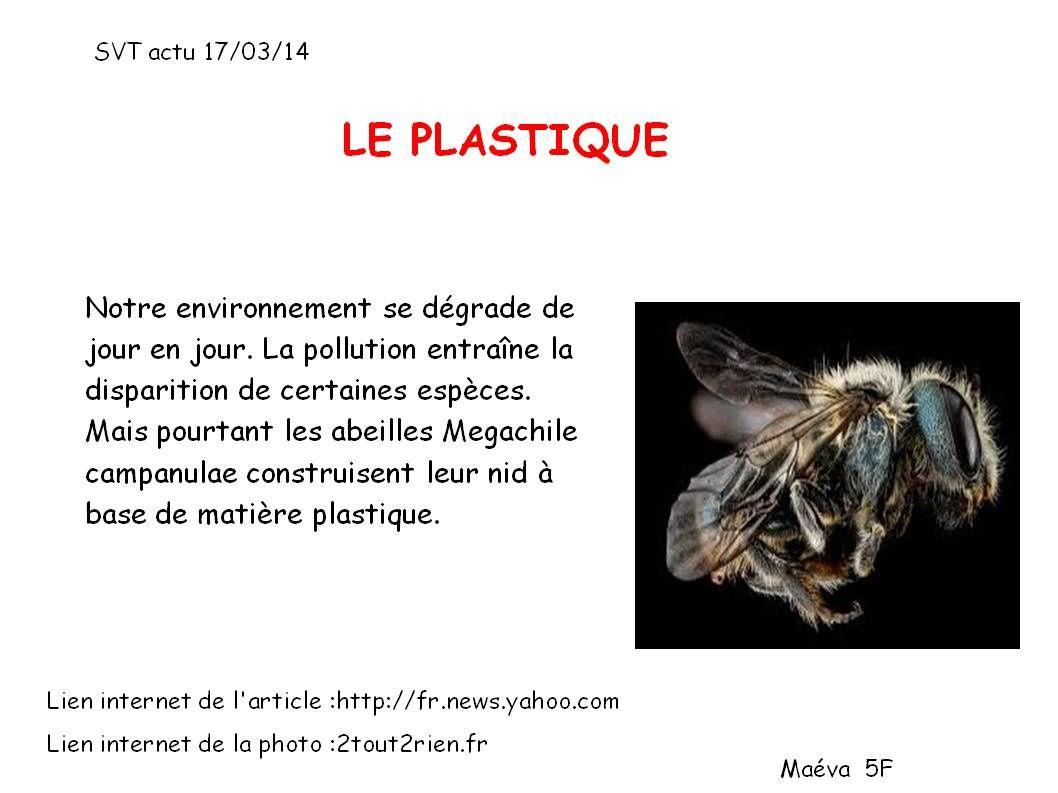 Plastique / oiseaux