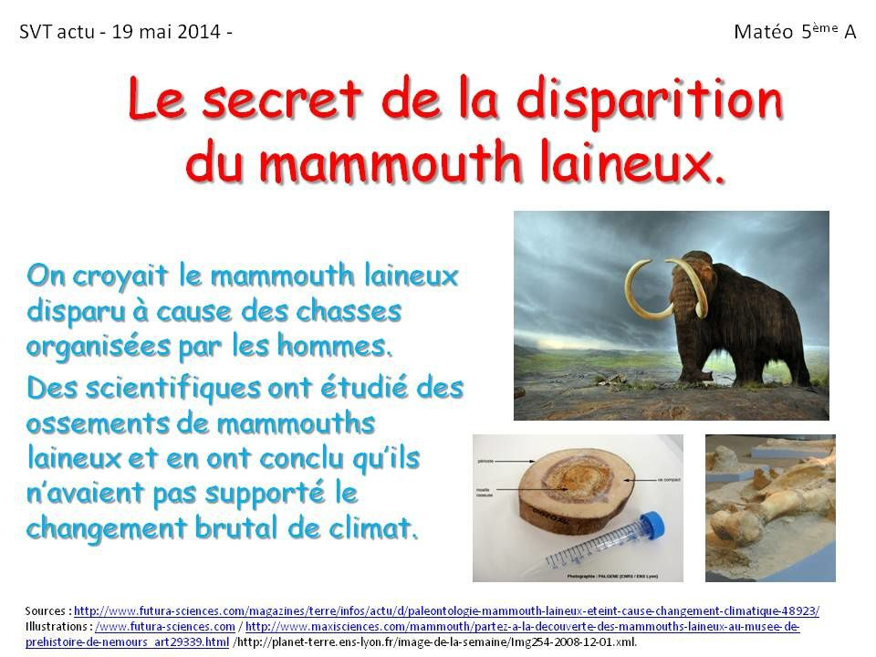 Mammouth laineux/ Voiture volante