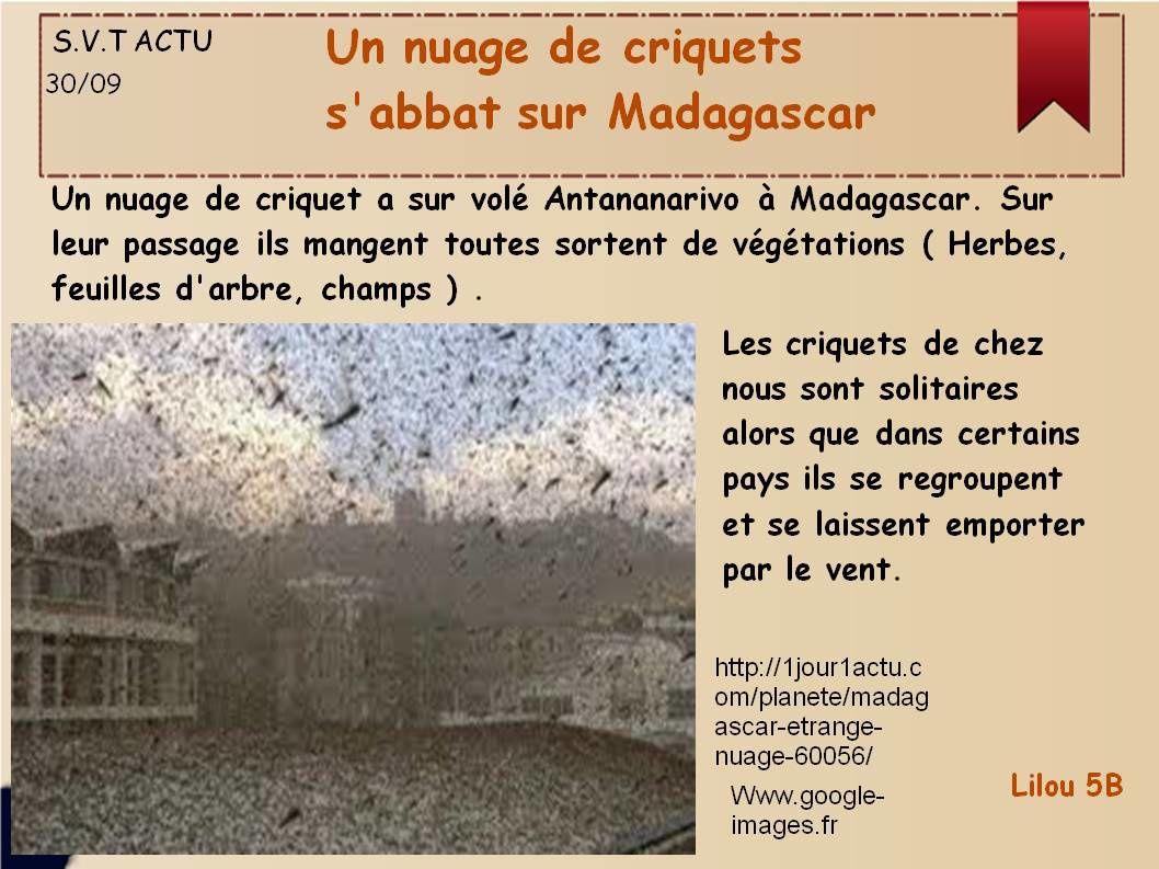 Criquets à Madagascar