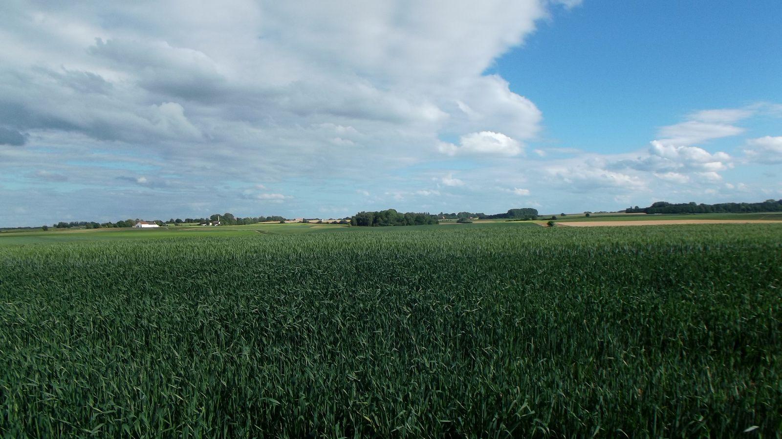 Ici étaient les positions des batteries Anglaises , sur la crête , belle vue également sur le Corps de Reille ...La stèle marque le dernier emplacement de l'artillerie royale à cheval Britannique.