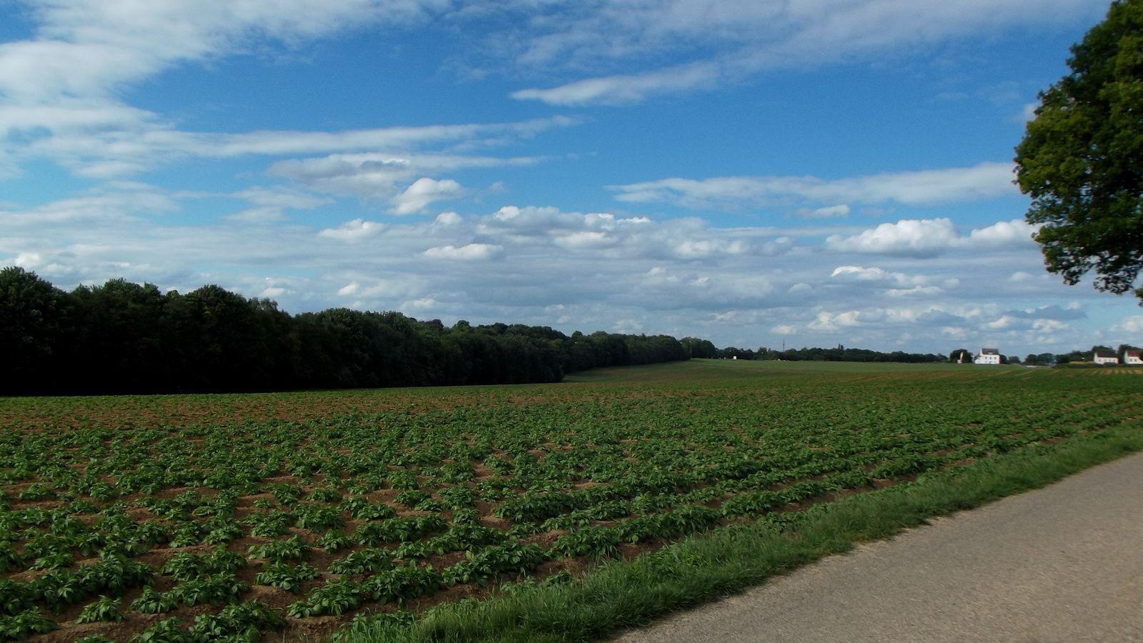 Sur la gauche du chemin , endroit ou se sont formés les carrés Britanniques , on voit bien que les Anglais étaient sur une crête et que la cavaleirie Française a due arrivée essoufflée et la charge ralentie sur le chemin pour repartir ensuite sur ces carrés ..Et bien sur  en 1815 il n'y avait pas les arbres sur la gauche  qui filent vers l'horizon .En 2014 c'est une autoroute/ring ....