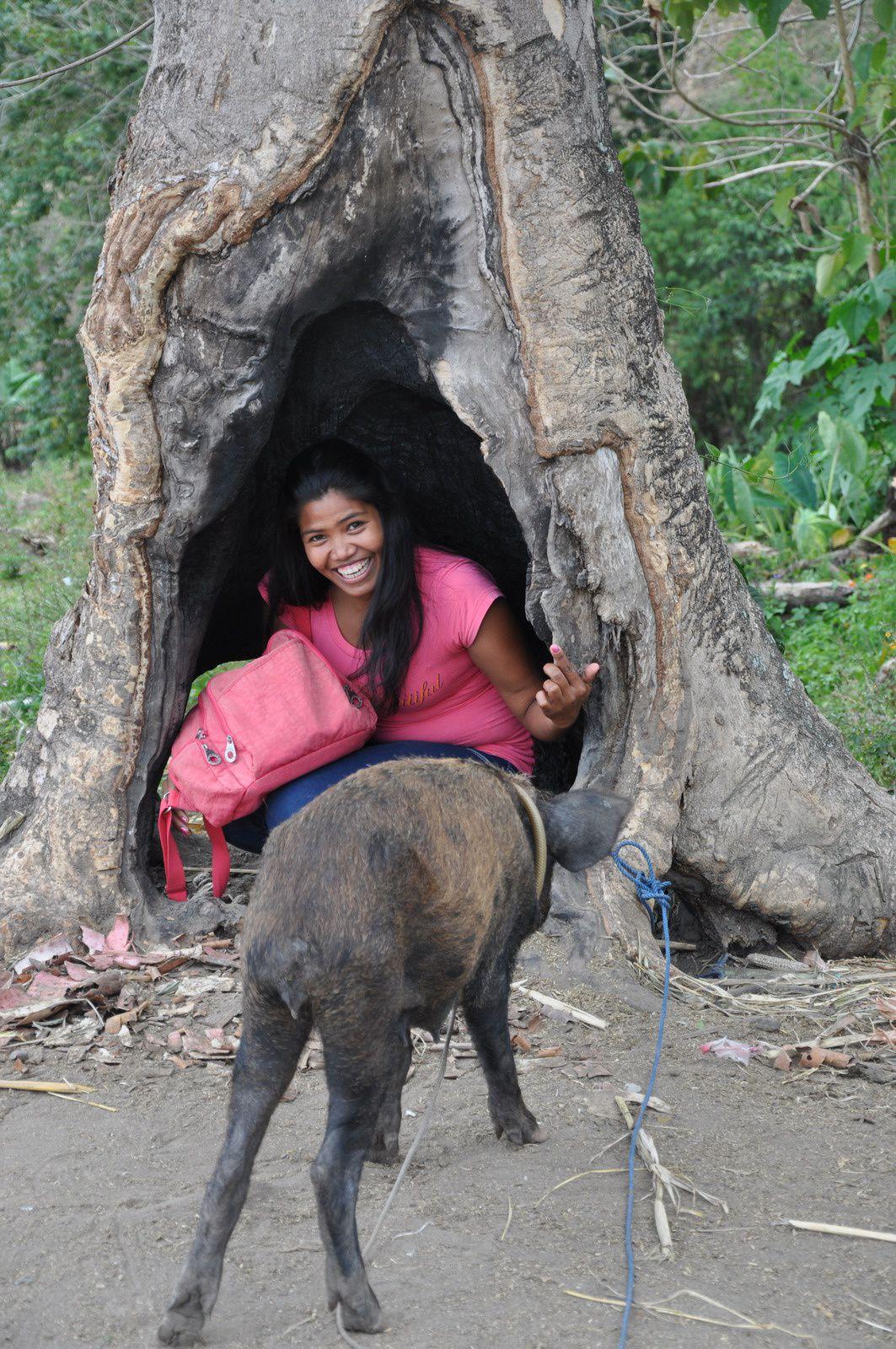 Arbres et déforestation….