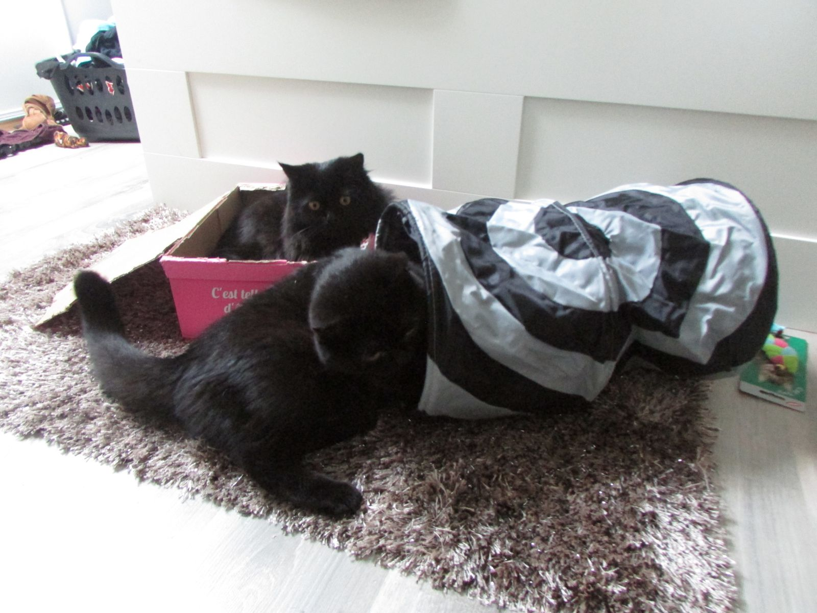 Miaou Box de Septembre