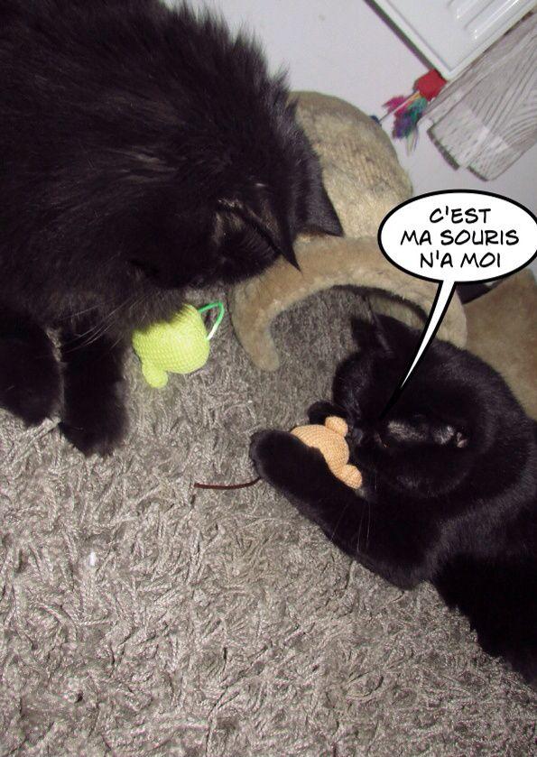 Qd la DoggyBox rencontre la KittyBox c'est ma tribu qui est ravie!!