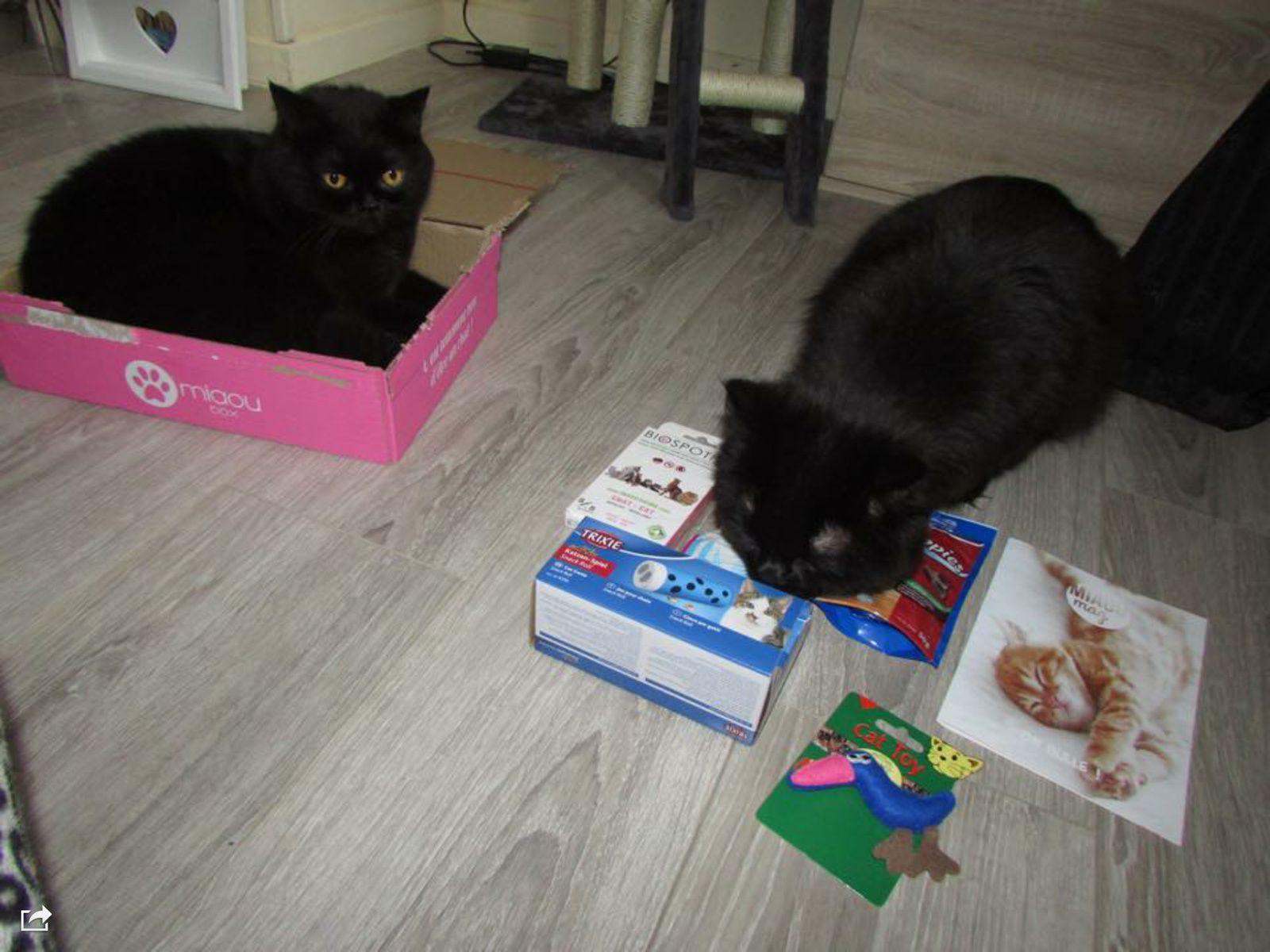 MiaouBox la box qui fait miauler Mystik et Many Bon Plan Votre 1 ère Box offerte