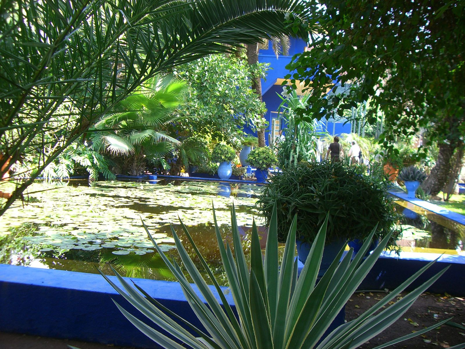 le jardin majorelle de marrakech ou le paradis sur terre trees and the city. Black Bedroom Furniture Sets. Home Design Ideas