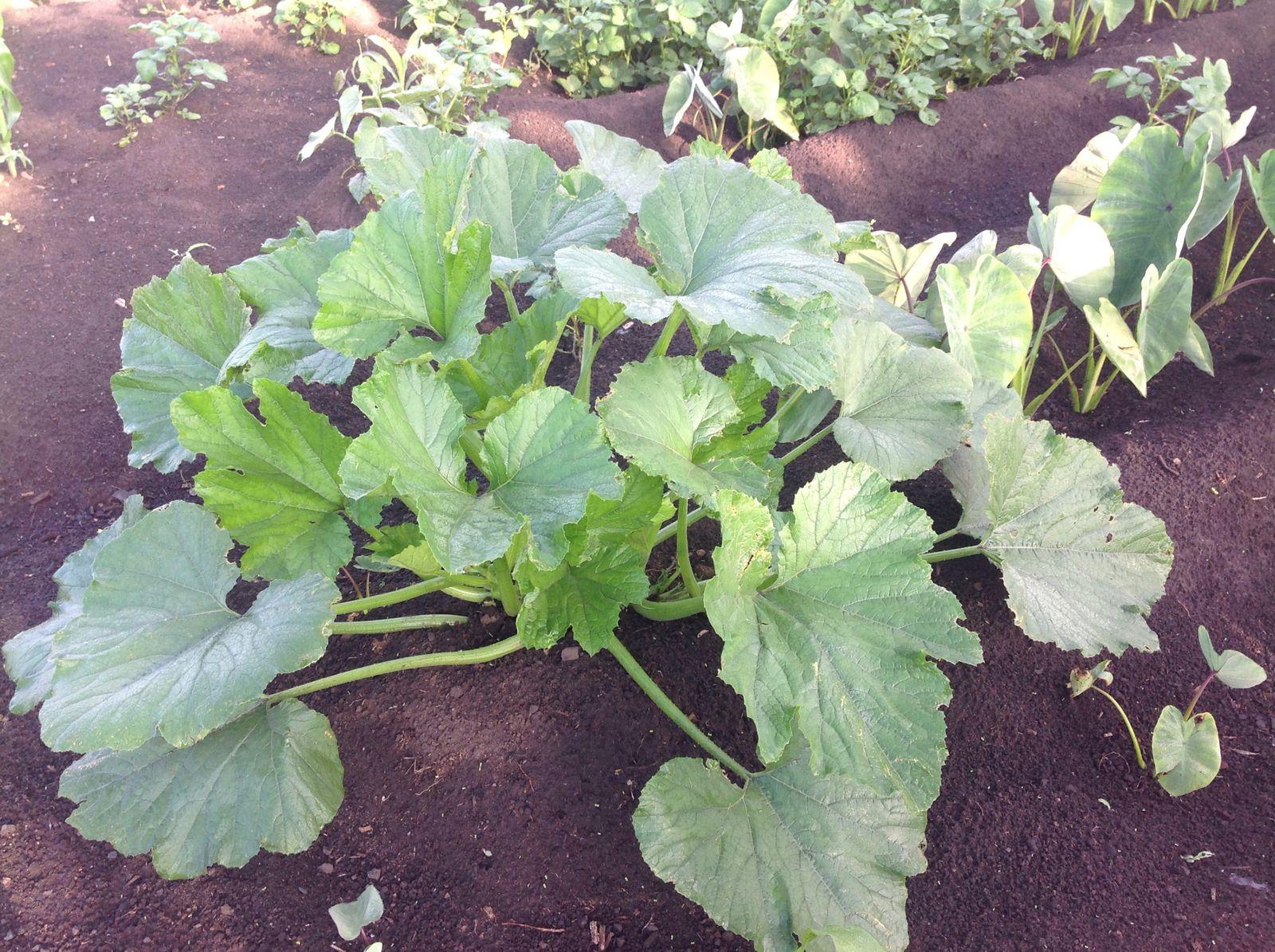 Les légumes bio c'est une source de vie et d santé.