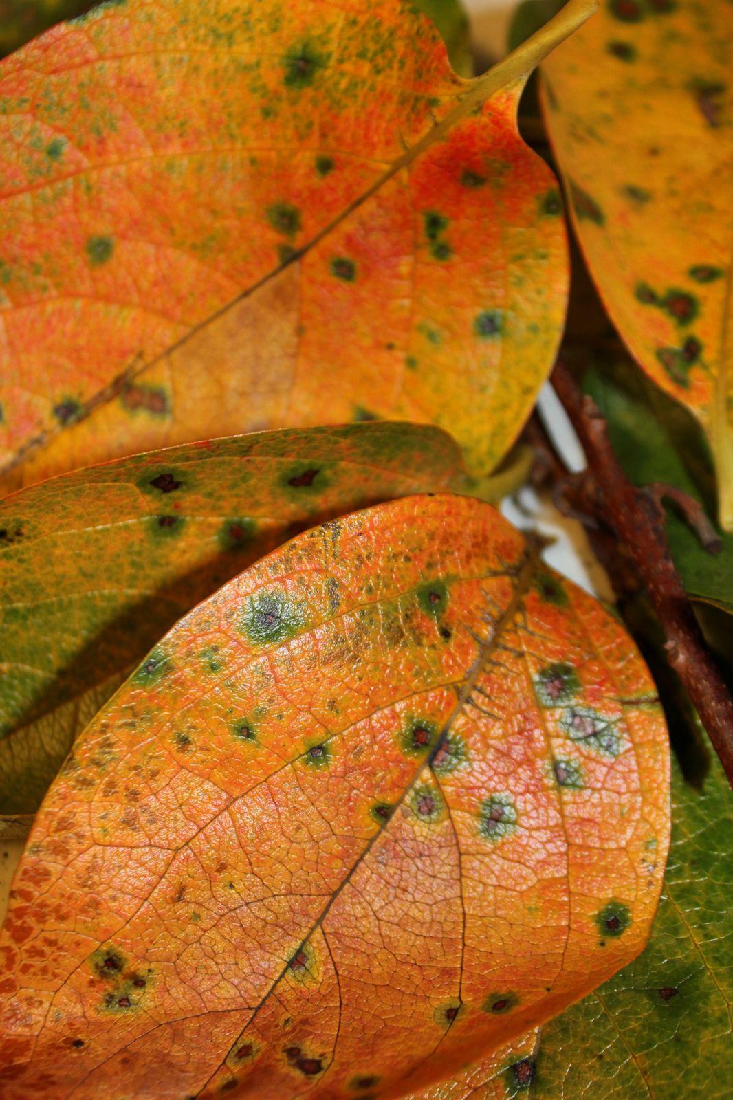 Délices d'automne: des fruits