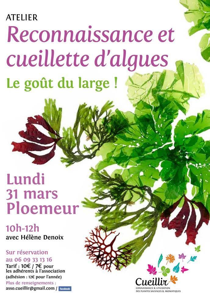Profitant d'un grand coefficient de marées, une sortie sur les algues comestibles avec Hélène Denoix, animatrice environnement.
