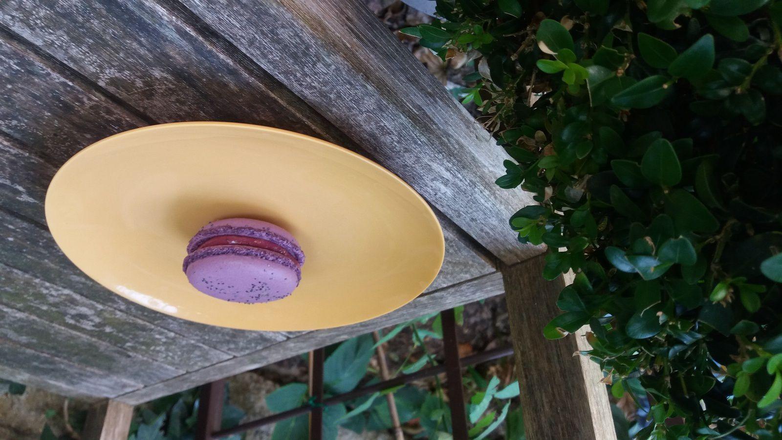 Home-made macaron du jour