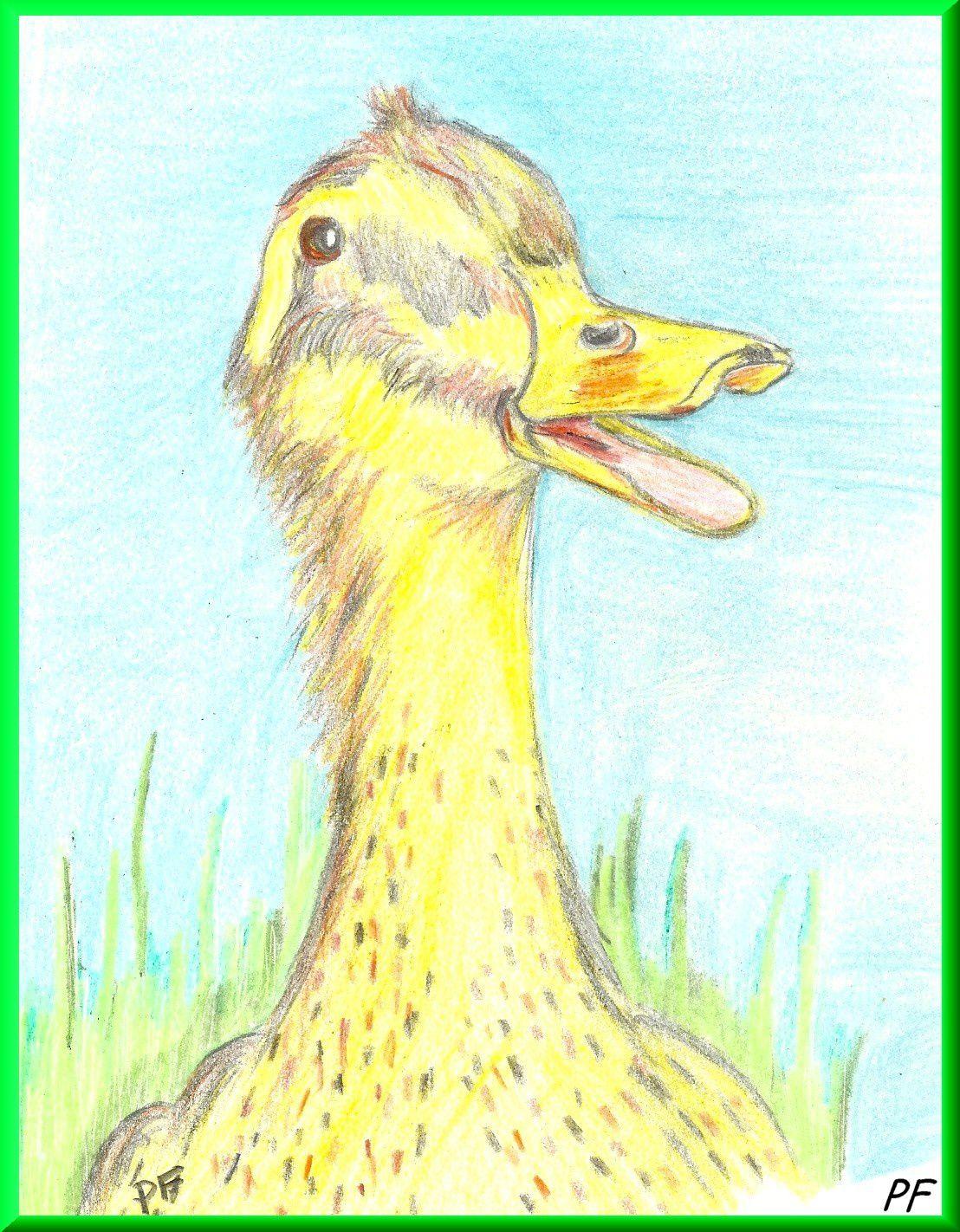Ne m'appelles plus jamais: «Mon Canard!»