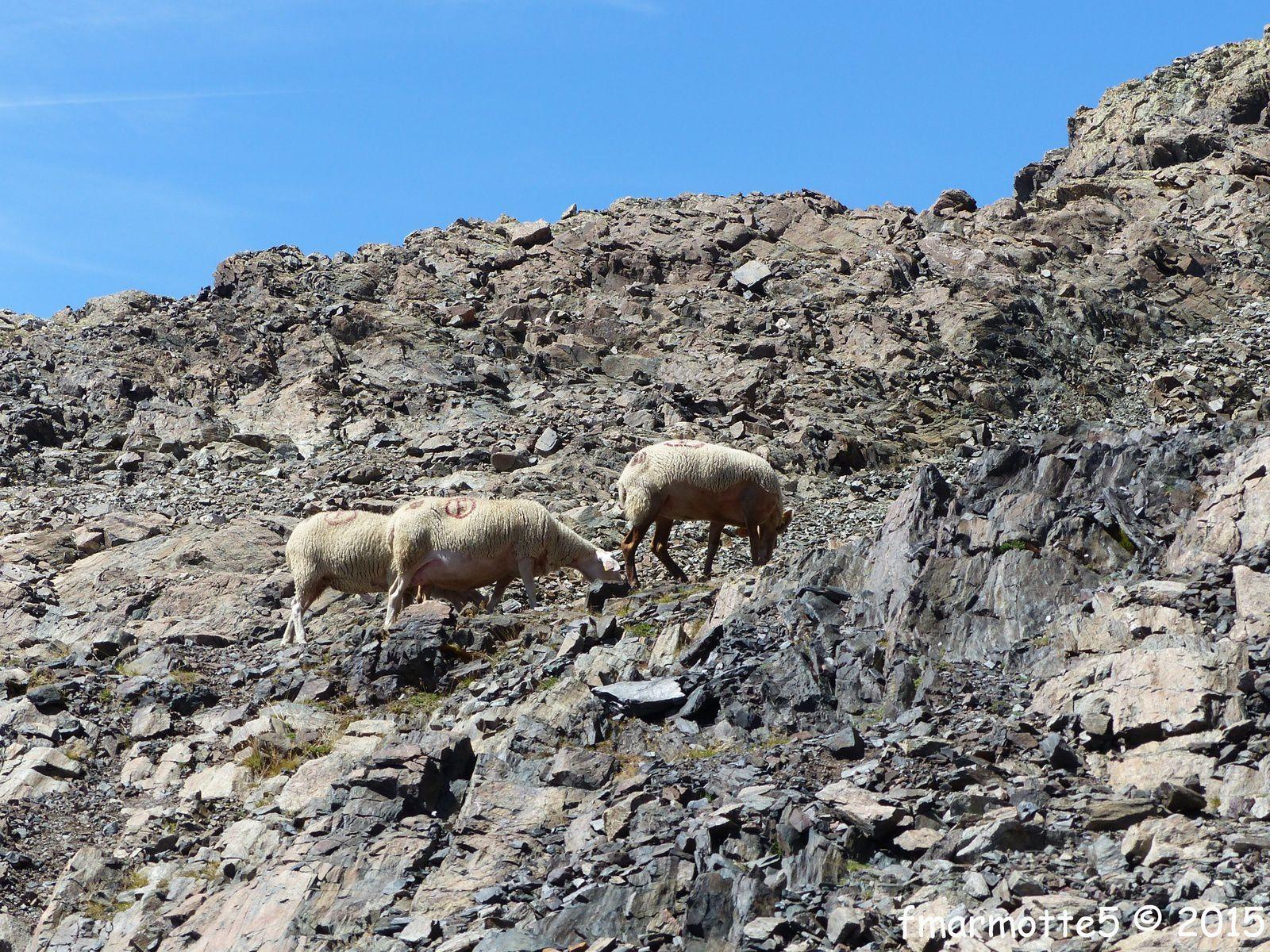 Le Vieux Chaillol 3163 m. Randonnée en Oisans.