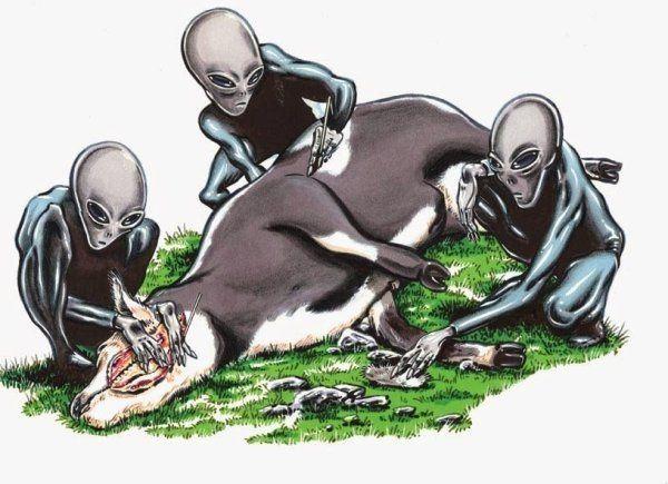 Etranges mutilations animales récemment en Grande Bretagne
