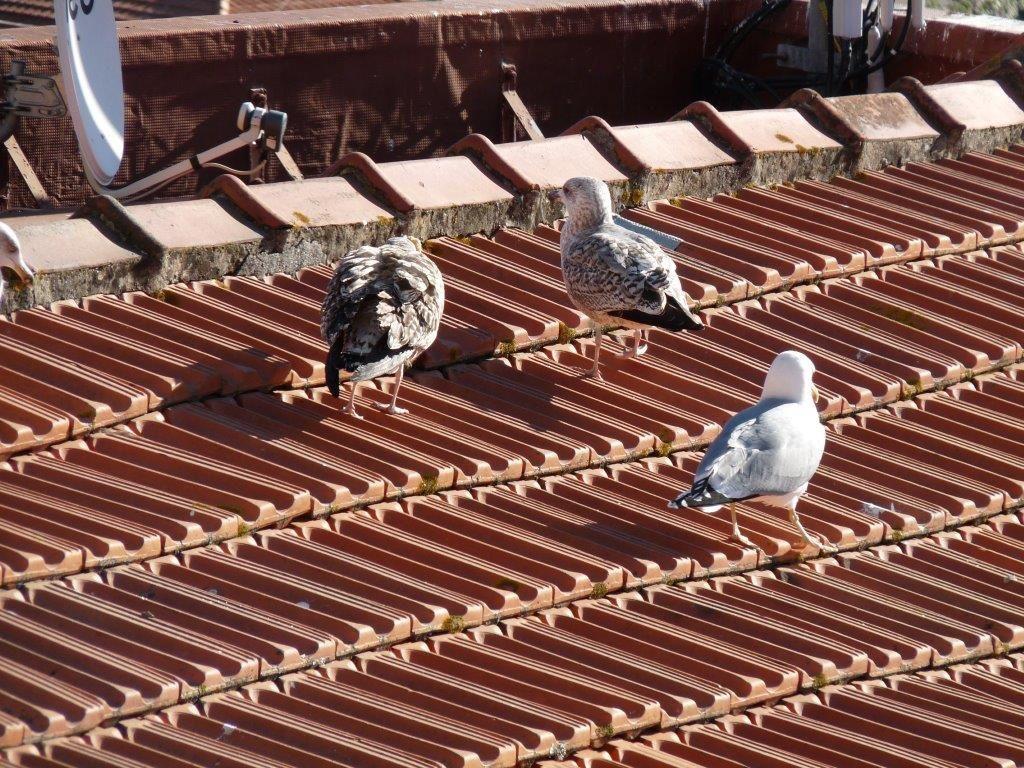 Le Porto des toits