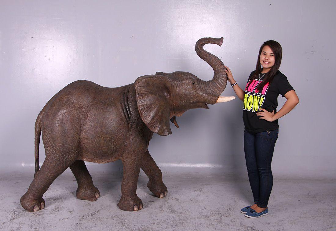 Un nouvel éléphant pour agrandir notre grande famille d' animaux exotiques