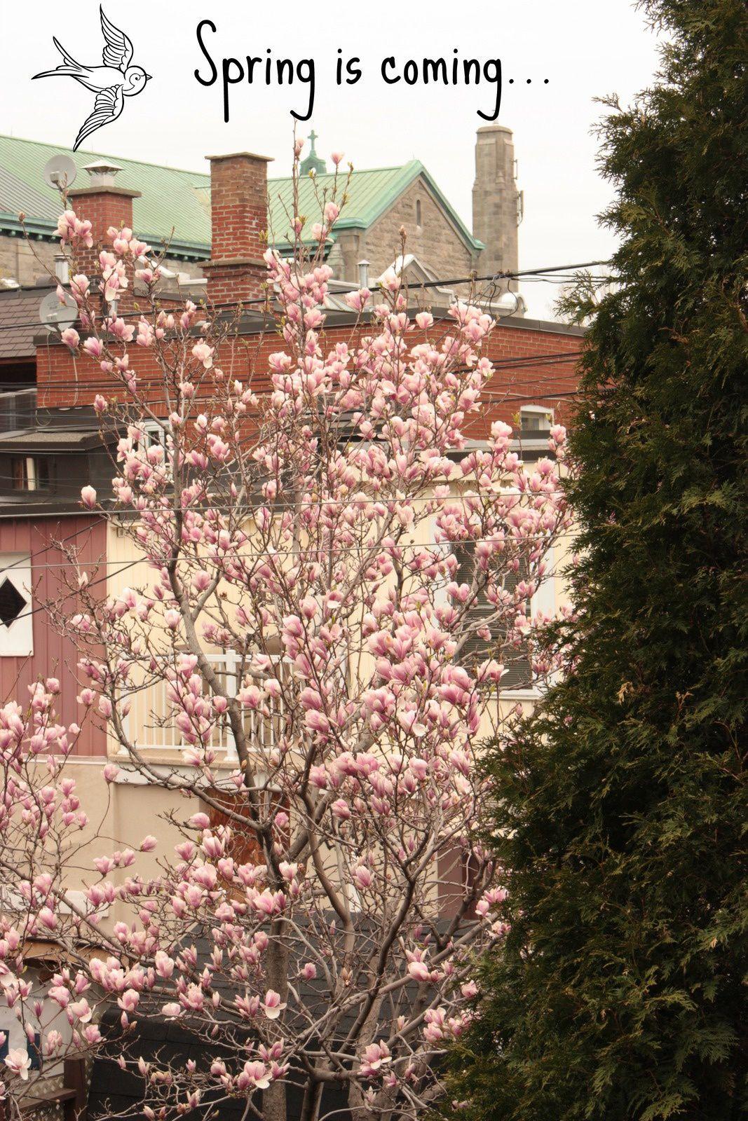 Enfin le printemps, le vrai